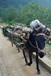 Horses used to carry wood, rice, tea and other goods on the roads of Yunnan