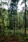 Jardin Wang Bing au coeur de la forêt