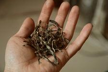 Des puerh <span class='translation'>(Pu Er tea)</span> brut d'apparence similaire mais de qualité bien différentes