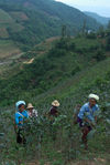 Cueilleuses de thés Bulang à Bang Xie