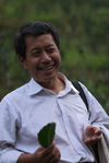 Producer puerh <span class='translation'>(Pu Er tea)</span> Bang Xie