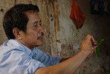 Producteur privilégiant les grandes feuilles à la mode du bourgeon