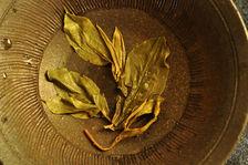 Exemple de maoha à l'ancienne contenant bourgeons et feuilles agées Copyright Sébastien Vacuithé