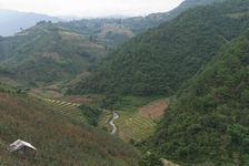 Arrive Bang Xie by tea plants