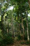Exemple de jardin intégré dans la forêt
