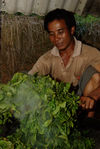 Sha Qing artisanal