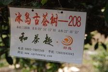 Arbres loués à Bing Dao