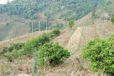 Quelques rares arbres anciens qui ont survécus au milieux des champs