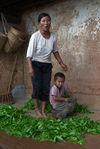 Famille de producteurs de thé à Shahe Banxie