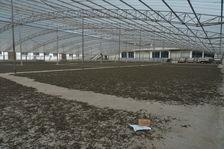 Séchage des différentes jardins à l'usine Rong Shi