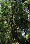 Close wild tea tree in the forest of Da Xue Shan