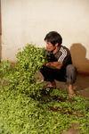 Transformation des feuilles chez Li Wen Quan