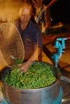 Transformation mécanique des feuilles au village de Bing Dao