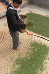 Transformation manuelles des feuilles au village de Bing Dao