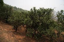 Dans les jardins anciens de Xiao Hu Sai
