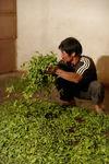 Travail des feuilles chez Li Wen Quan