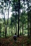Jardin ancien Wang Bing