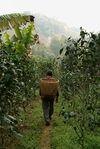Parcelle de Lao Tai Di Wang Bing