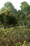 Jardin écologique Wang Bing
