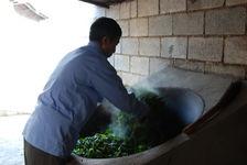 Leaf Processing in Wang Bing