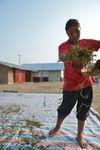 Travail soigné des feuilles au Laos