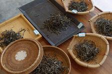 maocha Samples of different gardens Wu Yi