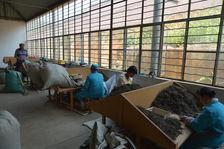 Tri fin des feuilles dans une usine de Yong De