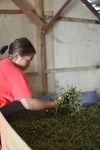 Leaf Processing in a workshop