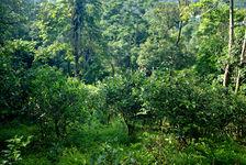 Jardin ancien à Yanuo Shan Yunnan