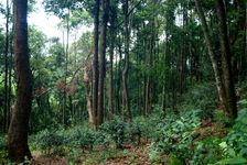 Jardin ancien à Yi Wu Yunnan