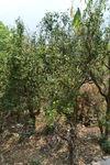 Jardin anciens à Lincang, Yunnan
