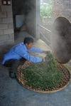Production traditionnelle du puerh <span class='translation'>(Pu Er tea)</span> à Yi Wu aujourd'hui