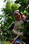 Jeune femme dans un arbre à Nanmei