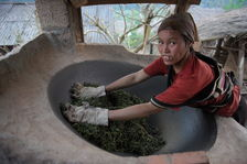 Travail des feuilles de thé au Laos