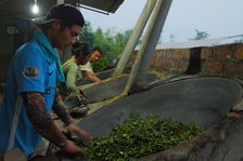 Men and women working together tea leaves