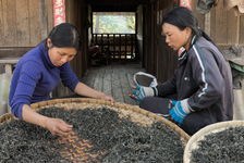 Small producers in Yanuo Shan