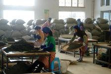 Usine Chen Sheng à menghai