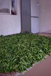 Fresh leaves drying in the kitchen (Wu Yi)