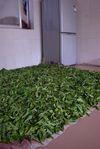 Feuilles fraîches séchant dans une cuisine (Yi Wu)
