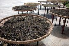 Séchage des feuilles au soleil à YiWu