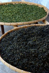 Leaves in the beginning (green) and end (black) drying YiWu