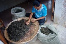 Tri des feuilles Jaunes à YiWu (Wang Bing)