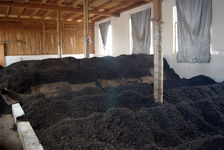 Fermentation of puerh <span class='translation'>(Pu Er tea)</span> (stack puerh) in Pu'er