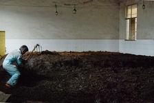 Fermentation du puerh <span class='translation'>(Pu Er tea)</span> (aération de la pile) à Lincang