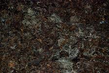 Fermentation du puerh <span class='translation'>(Pu Er tea)</span> (détail des moisissures) à Lincang