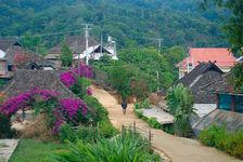 Tai Di containing trees with purple Yi Wu