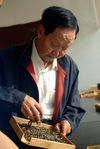 Zou Bing Liang observing a sample of Mao Cha