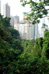 Hong Kong, a city thrust into the rainforest