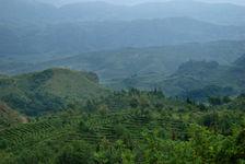 Fragment du jardin à thé Lan Ting Chun