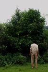 Du Guo Ting devant un de ses grand arbres